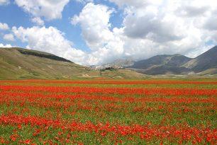 Castelluccio-fioritura-4